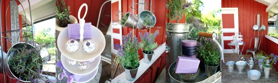 French_Lavender_1