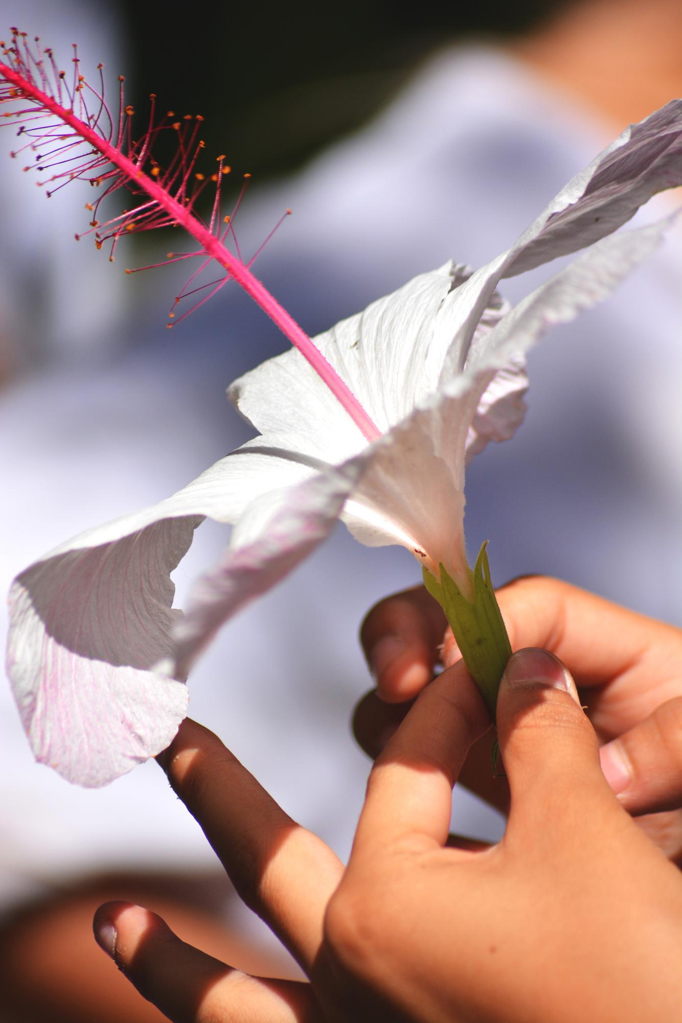 rabbit pearl thaimassage liljeholmen