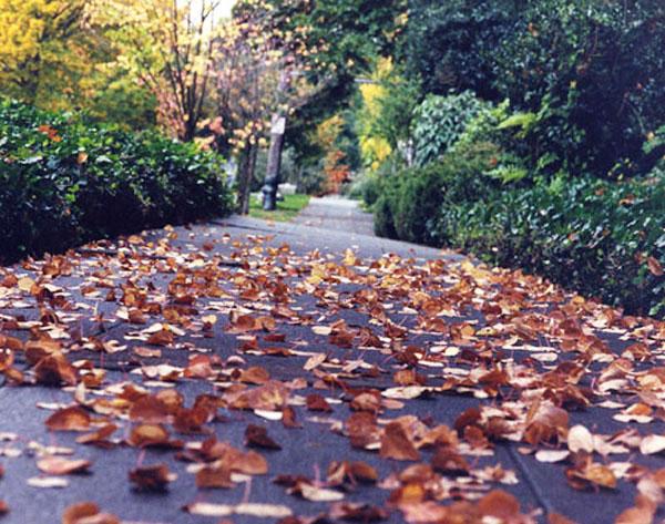 AutumnPath_2